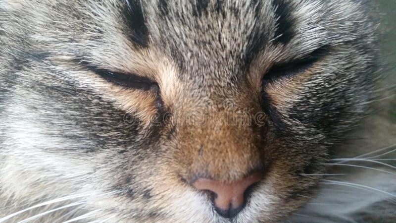 Γάτα με τις προσοχές ιδιαίτερες στοκ εικόνες