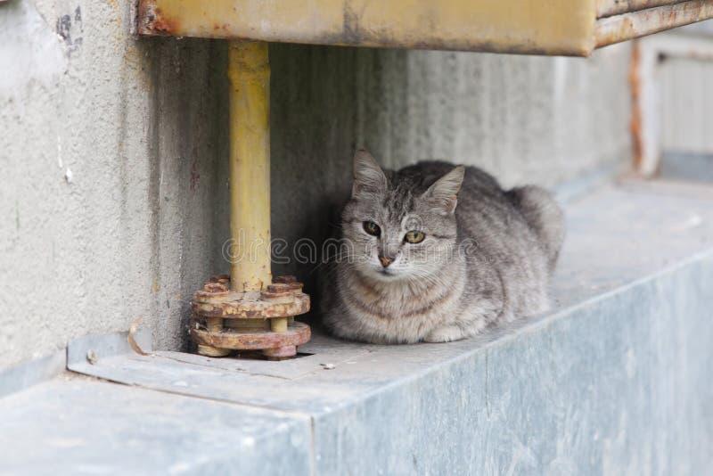 Γάτα με το τραυματισμένο μάτι στοκ εικόνες