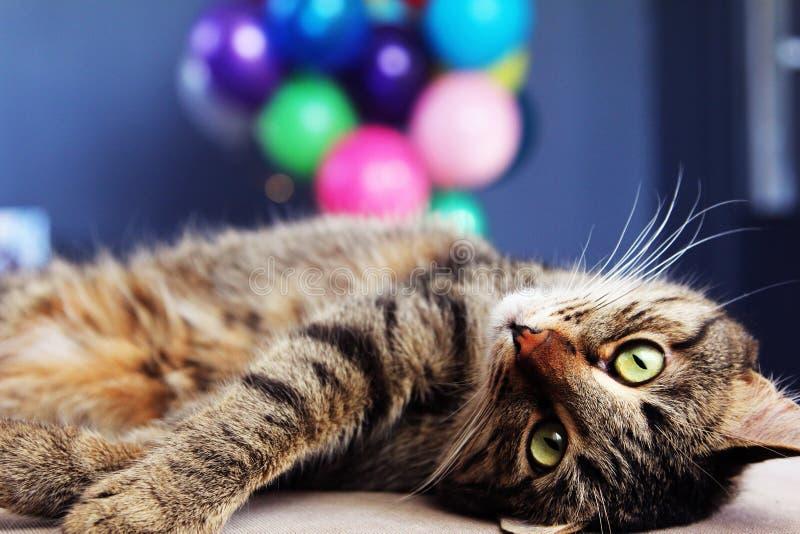 Γάτα με ballons στοκ φωτογραφίες με δικαίωμα ελεύθερης χρήσης