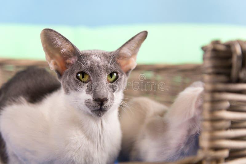 Γάτα μητέρων με τη φωλιά στο καλάθι στοκ εικόνες