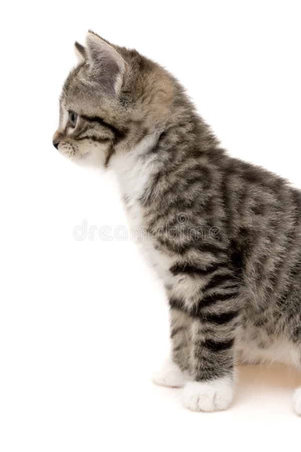 γάτα μικρή στοκ εικόνα με δικαίωμα ελεύθερης χρήσης