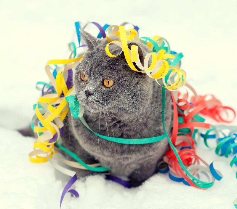 Γάτα μπλεγμένη σε πολύχρωμο διακοσμητικό στο χιόνι στοκ φωτογραφία με δικαίωμα ελεύθερης χρήσης