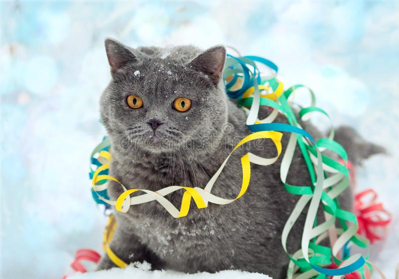 Γάτα μπλεγμένη σε πολύχρωμο διακοσμητικό στο χιόνι στοκ εικόνες