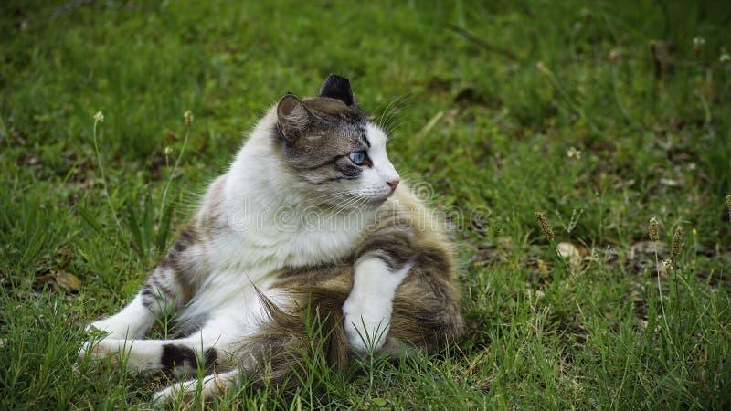 Γάτα μπλε ματιών στο ναυπηγείο στοκ εικόνες