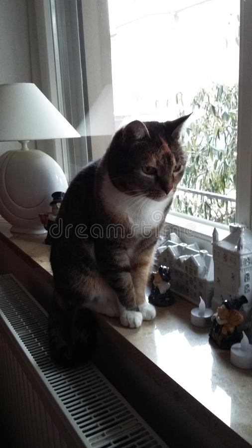 Γάτα μπροστά από το παράθυρο στοκ εικόνα με δικαίωμα ελεύθερης χρήσης
