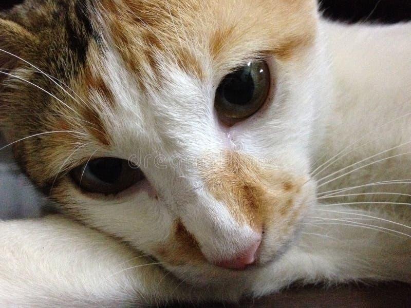 γάτα μόνη στοκ εικόνες με δικαίωμα ελεύθερης χρήσης