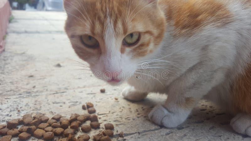 Γάτα οδών που τρώει τα τρόφιμα στοκ φωτογραφίες
