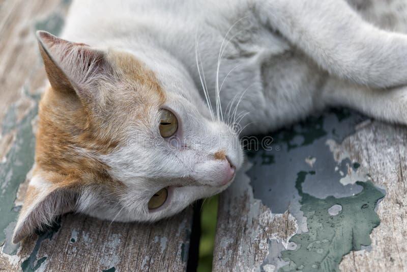 Γάτα οδών στο πάρκο στοκ εικόνα