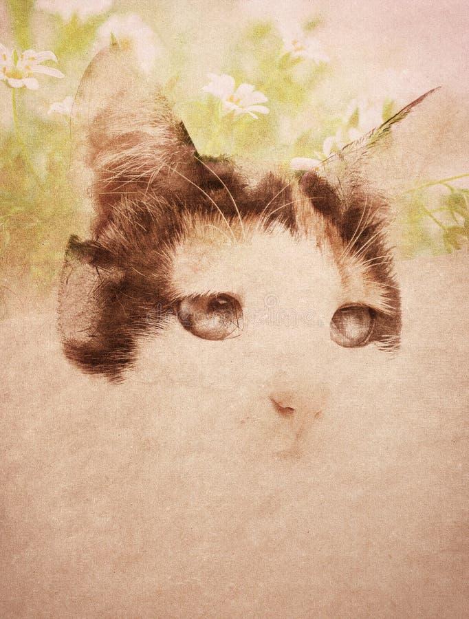 Γάτα πέρα από το υπόβαθρο grunge στοκ φωτογραφία με δικαίωμα ελεύθερης χρήσης