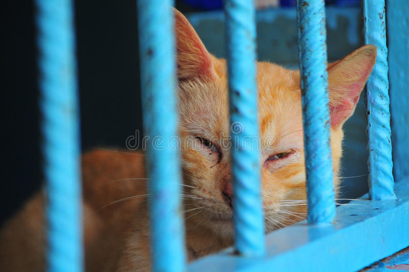 Γάτα πίσω από τα κάγκελα στοκ φωτογραφίες με δικαίωμα ελεύθερης χρήσης