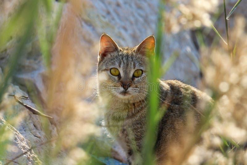 Γάτα πίσω από τους θάμνους στοκ εικόνα