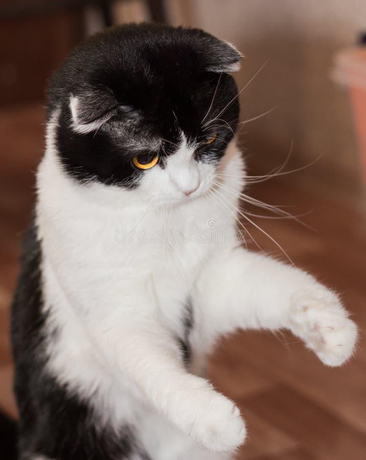 Γάτα παιχνιδιού στοκ φωτογραφίες με δικαίωμα ελεύθερης χρήσης