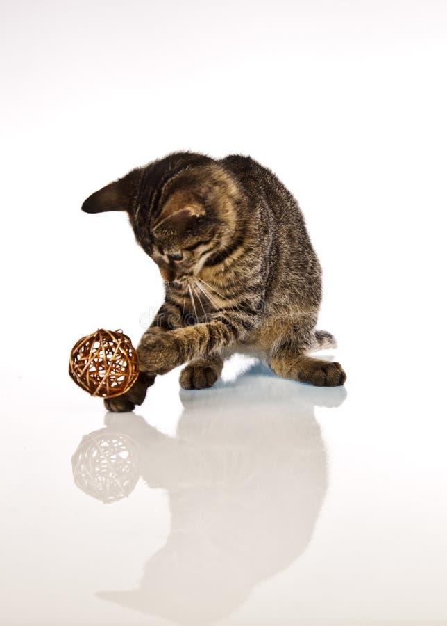 Γάτα παιχνιδιού, Χριστούγεννα στοκ εικόνες