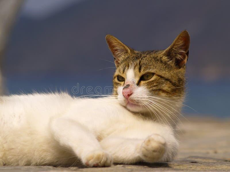 γάτα περιπλανώμενη στοκ εικόνα