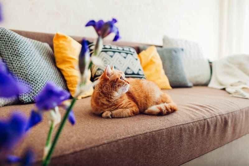 Γάτα πιπεροριζών που βρίσκεται στον καναπέ στο καθιστικό από τα πορφυρά λουλούδια στοκ φωτογραφίες με δικαίωμα ελεύθερης χρήσης