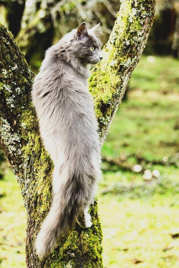 Γάτα που αναρριχείται στο δέντρο στοκ εικόνα με δικαίωμα ελεύθερης χρήσης