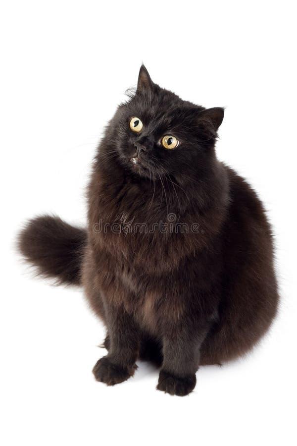 γάτα που απομονώνεται μαύ&rho στοκ εικόνες με δικαίωμα ελεύθερης χρήσης