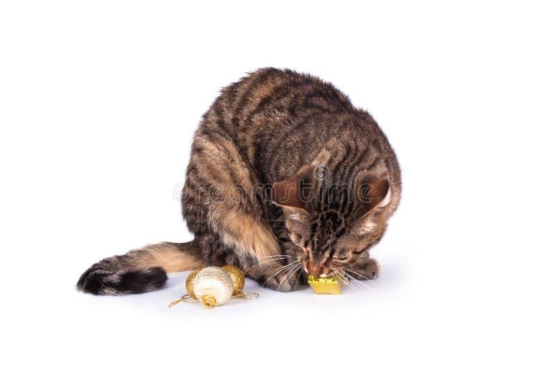 Γάτα που απομονώνεται τιγρέ στοκ φωτογραφίες