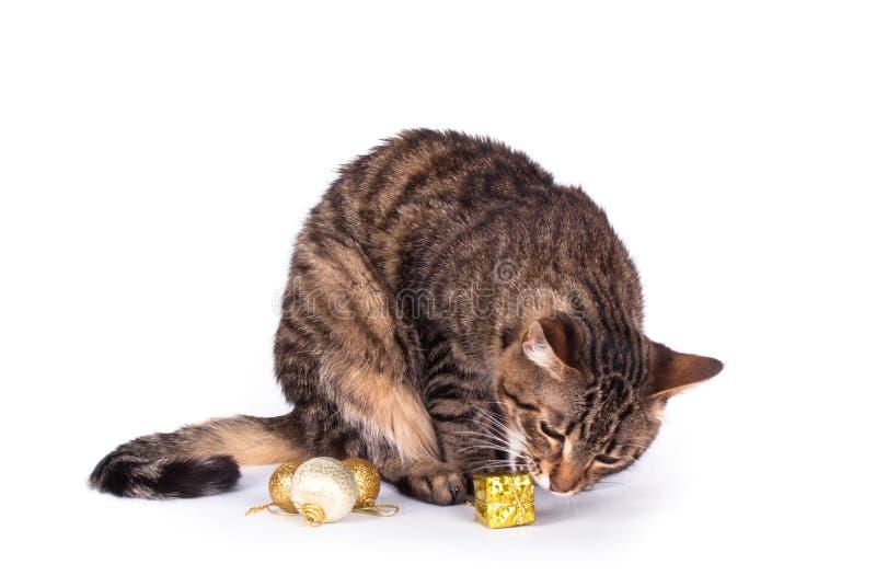 Γάτα που απομονώνεται τιγρέ στοκ φωτογραφία με δικαίωμα ελεύθερης χρήσης