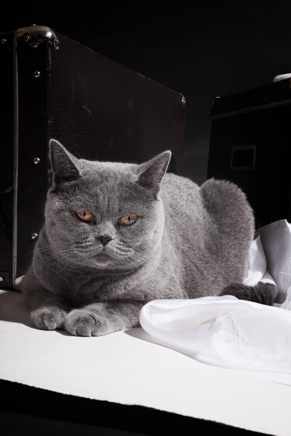 Γάτα που βρίσκεται κοντά στη βαλίτσα στοκ εικόνα με δικαίωμα ελεύθερης χρήσης