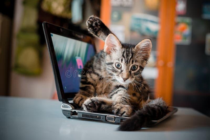 Γάτα που βρίσκεται στο σημειωματάριο στοκ φωτογραφία με δικαίωμα ελεύθερης χρήσης