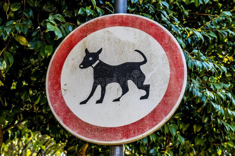 Γάτα που επιτρέπεται καμία στοκ φωτογραφία με δικαίωμα ελεύθερης χρήσης
