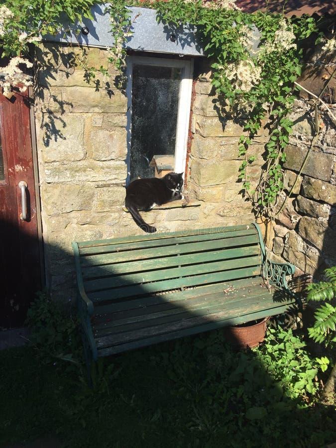 Γάτα που κάθεται στο υπόστεγο windowsill στοκ εικόνα