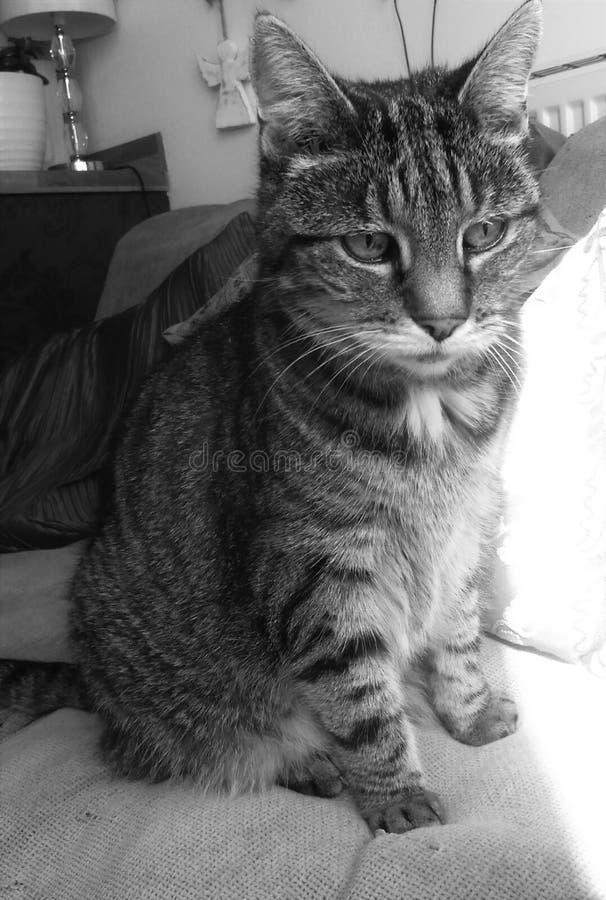 Γάτα που κάθεται τιγρέ στον καναπέ στοκ φωτογραφία με δικαίωμα ελεύθερης χρήσης