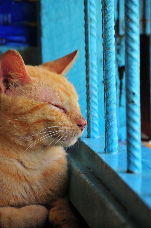 Γάτα που κοιτάζει επίμονα έξω ένα παράθυρο στοκ φωτογραφίες