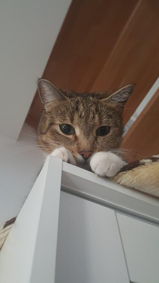 γάτα που κοιτάζει κάτω στοκ φωτογραφίες με δικαίωμα ελεύθερης χρήσης