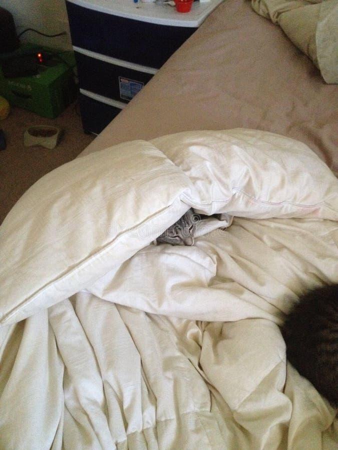 γάτα που κρύβεται στοκ φωτογραφία