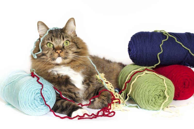 Γάτα που μπλέκεται στο νήμα στοκ εικόνα με δικαίωμα ελεύθερης χρήσης