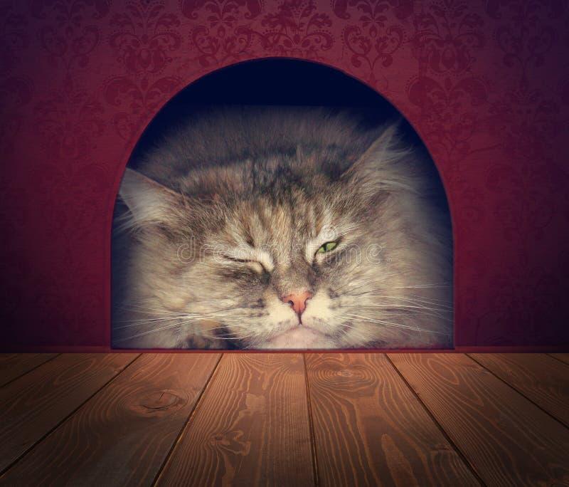 Γάτα που περιμένει σε μια τρύπα ποντικιών στοκ φωτογραφίες με δικαίωμα ελεύθερης χρήσης