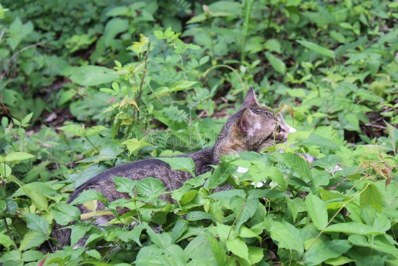Γάτα που προσέχει ένα πουλί στοκ εικόνα
