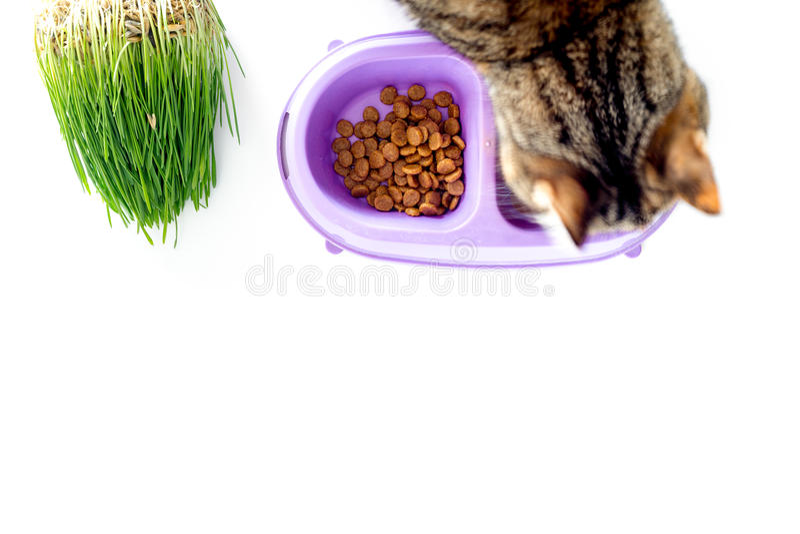 Γάτα που τρώει τα τρόφιμα από το κύπελλο στην άσπρη τοπ άποψη υποβάθρου copyspace στοκ φωτογραφίες