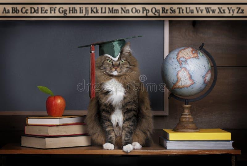 Γάτα που φορά Mortarboard στοκ εικόνες