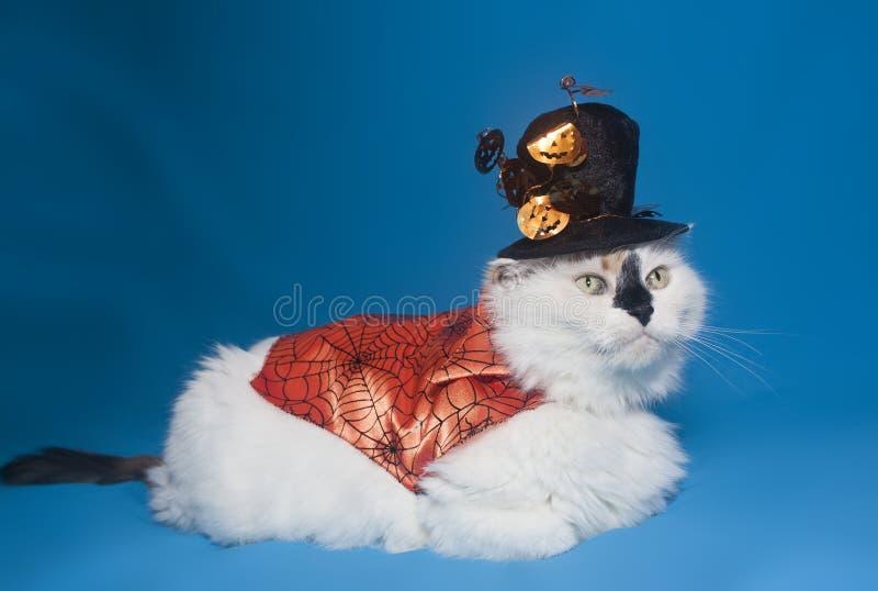 Γάτα σε ένα ακρωτήριο αποκριών και ένα καπέλο στοκ φωτογραφία