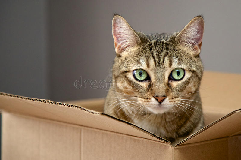 Γάτα σε ένα κιβώτιο στοκ εικόνες