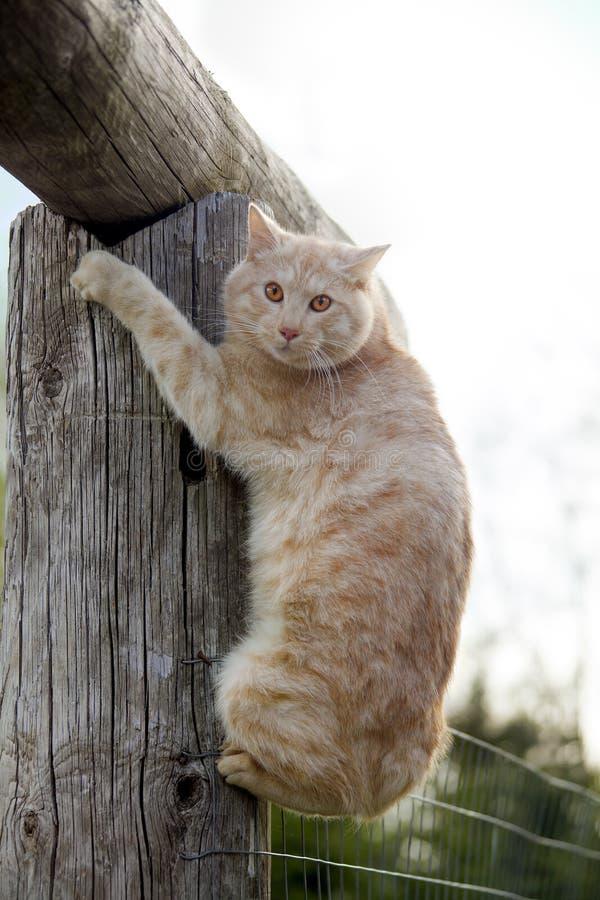 Γάτα σε ένα κούτσουρο στοκ φωτογραφίες