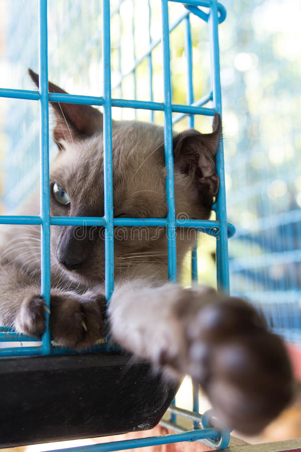 Γάτα σε ένα κλουβί στοκ εικόνες
