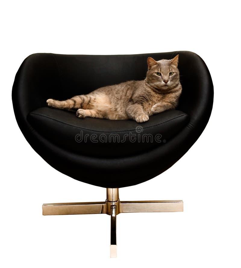 Γάτα σε μια έδρα στοκ εικόνες