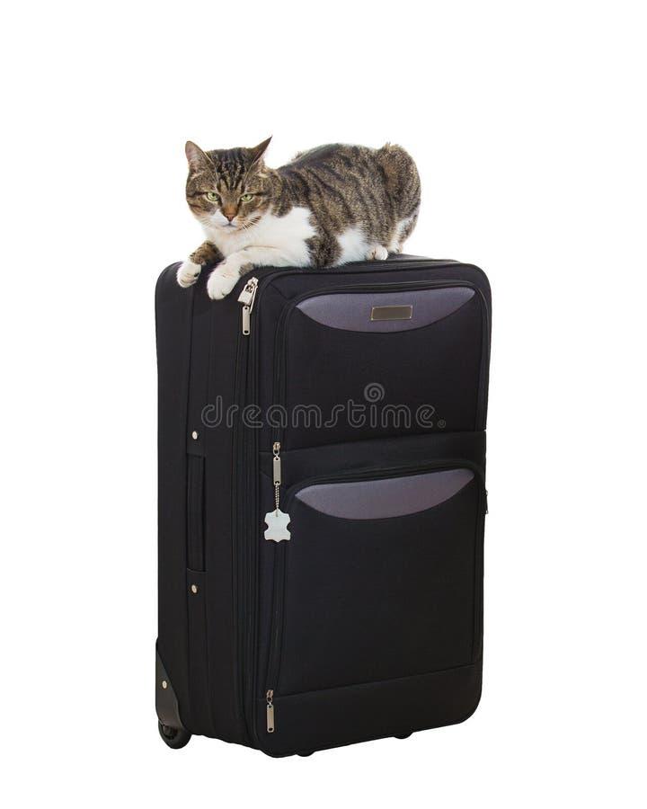 Γάτα σε μια βαλίτσα στοκ εικόνες με δικαίωμα ελεύθερης χρήσης