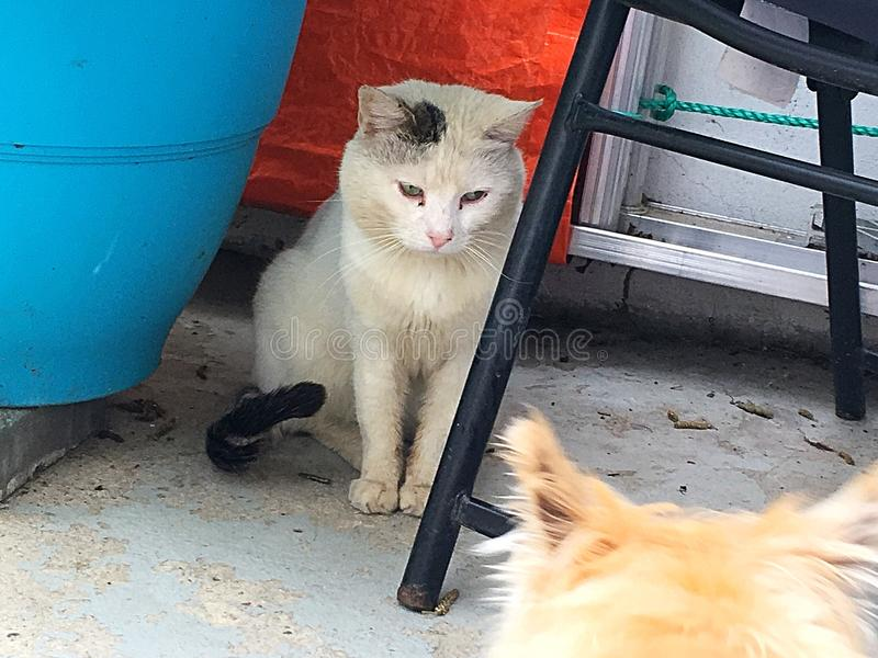 Γάτα & σκυλί στοκ εικόνες
