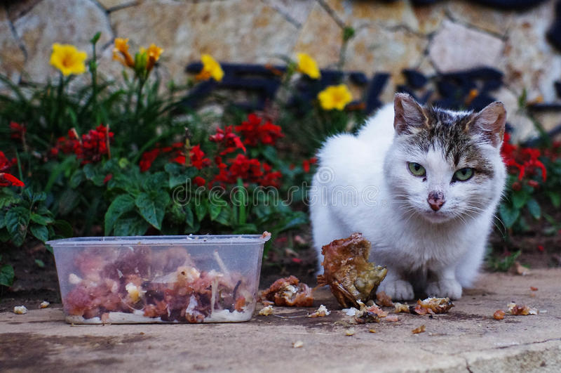 Γάτα στα λουλούδια στοκ εικόνες με δικαίωμα ελεύθερης χρήσης