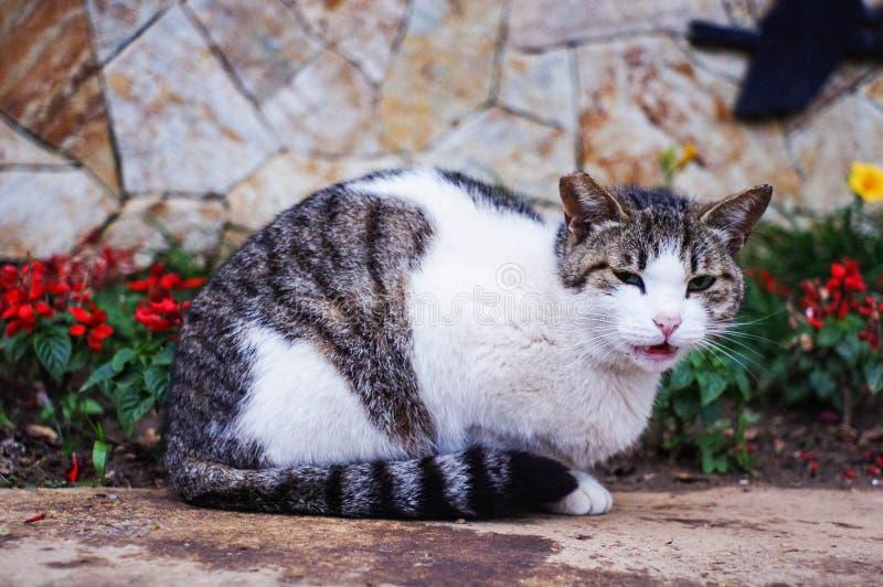 Γάτα στα λουλούδια στοκ εικόνες
