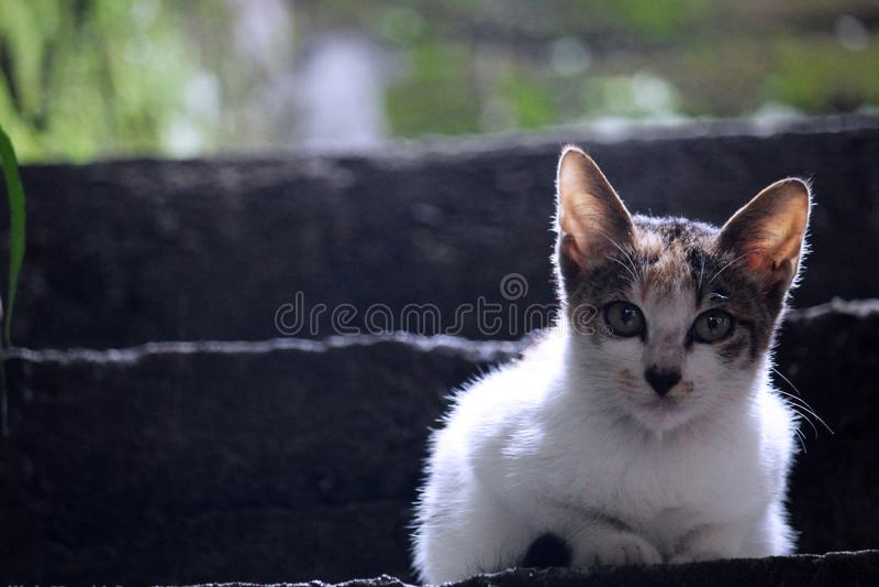 Γάτα στα σκαλοπάτια στοκ εικόνες