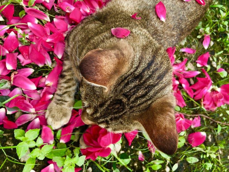 Γάτα στα τριαντάφυλλα στοκ εικόνα