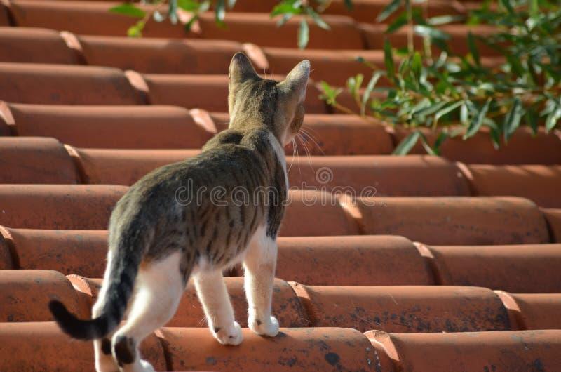 Γάτα στεγών στοκ φωτογραφία με δικαίωμα ελεύθερης χρήσης