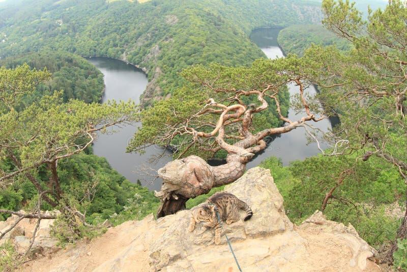 Γάτα στην άποψη σχετικά με τον ποταμό Vltava - Vyhlidka Maj στοκ εικόνες με δικαίωμα ελεύθερης χρήσης