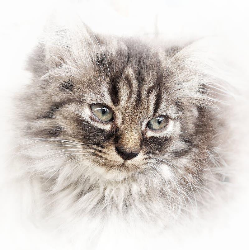 Γάτα στην επίδραση ζωγραφικής στοκ φωτογραφία